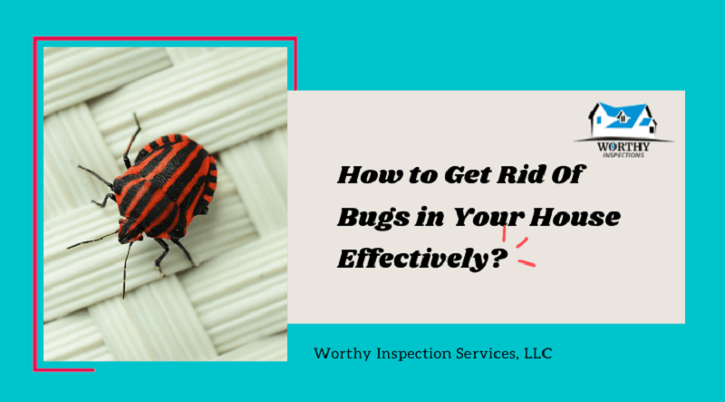 5 Tips to Protect Your Home from Bugs