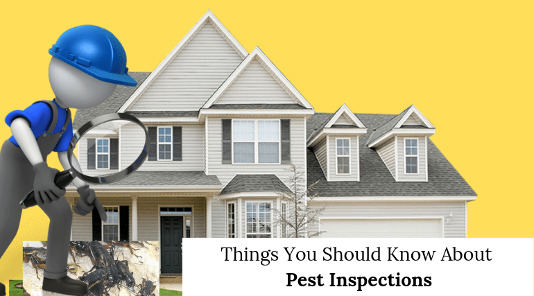 Things You Should Know About Pest Inspections