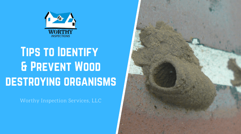 Tips to Identify & Prevent Wood Destroying Organisms