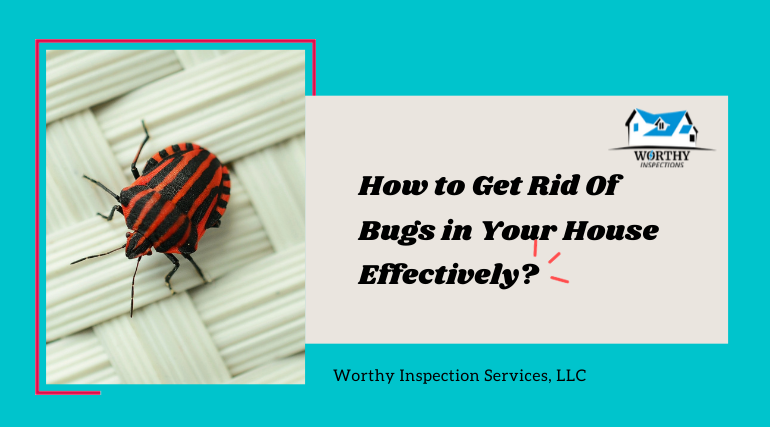 Protect Your Home from Bugs